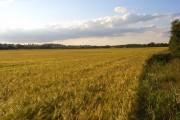 Farmland, Cookham