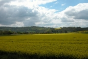 Looking over Rape fields towards South Harting