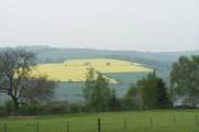Rape Seed Field above Oughtibridge
