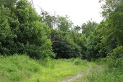 Woodland near Felkington
