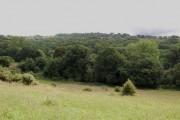 St Helens woods