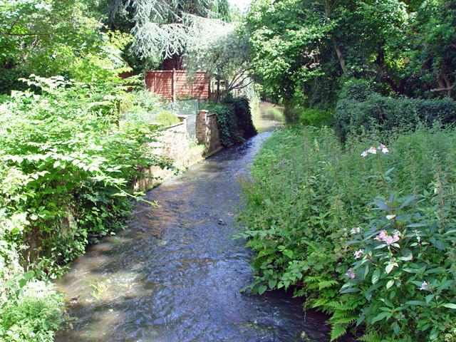 A stream in Chobham