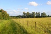 Meadow and bridleway, Bainton