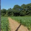 Footpath to Mill Wood near Michelham