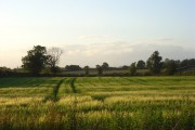Barley, Hethe