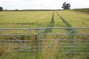Field of wheat beside the B4213