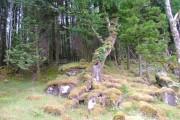 Woodland in Ardnamurchan