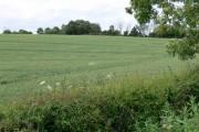Farmland near Bruntingthorpe