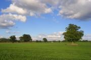 Farmland, Wokingham