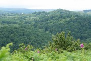 Lustleigh: towards Horsham Cleave