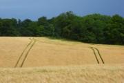 Barley, Ashampstead