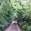 The lane to the White House - Lon Ty Gwyn