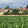 View across beet field to Mendlesham