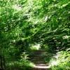 Footpath near Edge End