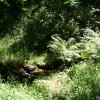 Dartmoor Forest: a Dart tributary