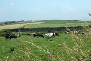 Farmland towards Mathry