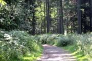 Oakenhill Wood