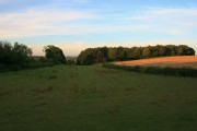 Field and Thacker Wood