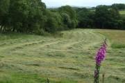 Grass cutting under way, Ceredigion