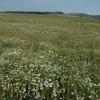 Farmland near Kingham