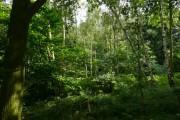Birch and Oak Woodland