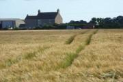 Barley, Abbeytown