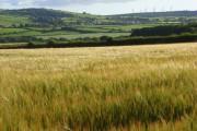 Barley, Boltongate