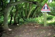 Steeple Woods