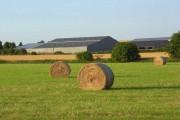 Hay bales and barns, Haxton