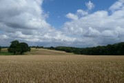 Summer view over Wortley Park