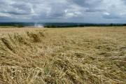 Flattened wheat field