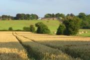 Farmland, Haxton