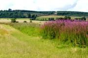 Farmland near Ardullie