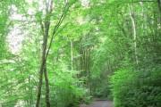 Budshead Wood, Plymouth.