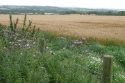 Land at Tidbury Farm