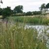 Ashby Canal near Shenton