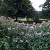 Alien invader in Castle Meadow