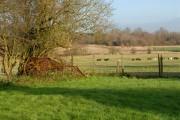 Farmland off Ashton heath