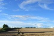 Wheat, Catmore