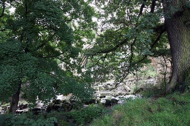 Bridge through the trees