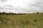 Field near Merrifield