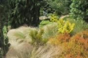 Grasses in the Winter Garden at Rosemoor