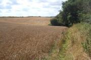 Wheat field near Barham