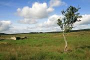 Farmland at Caulside