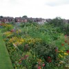 Allotments looking East
