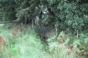 Woodland edge, Boquharn