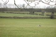 Ewe and lamb, Kitchen Hill