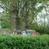 Little Houses at Castle Morris