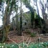 Bird Box & Old Mill