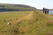 Footpath and pasture beside the River Cuckmere, Exceat